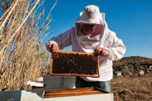 Honey extract procedure - Mykonos Insland