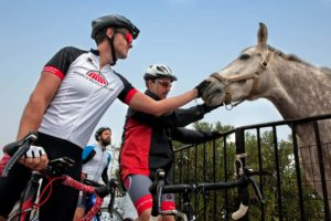 A horse is a friendly encounter on our cycling day in Tinos Island