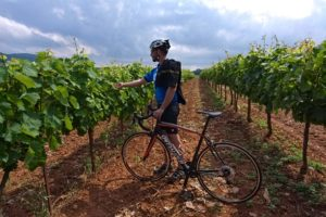 Cyclist is having a break and is checking at wine grapes during the Nemea bike wine tour