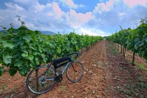 Road bike in front of wine grapes during a wine tour in Nemea, Peloponnese