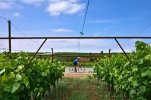 Road cycling is riding thought vineyards in the Peloponnese Nemea