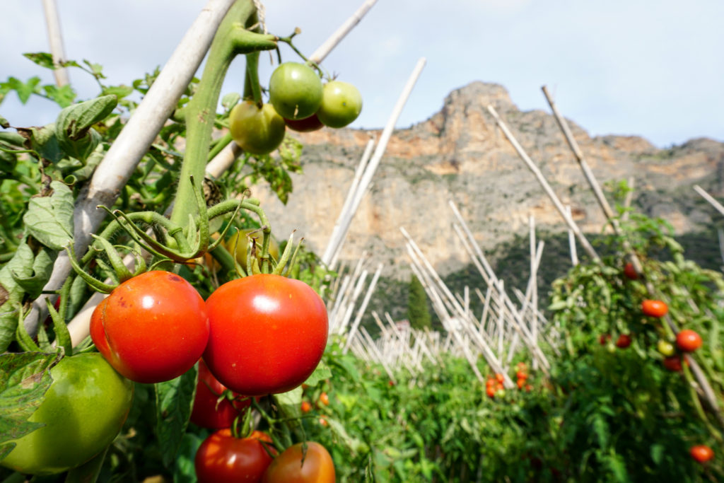 Tomato fields with a the famous rock of Leonidio in the back