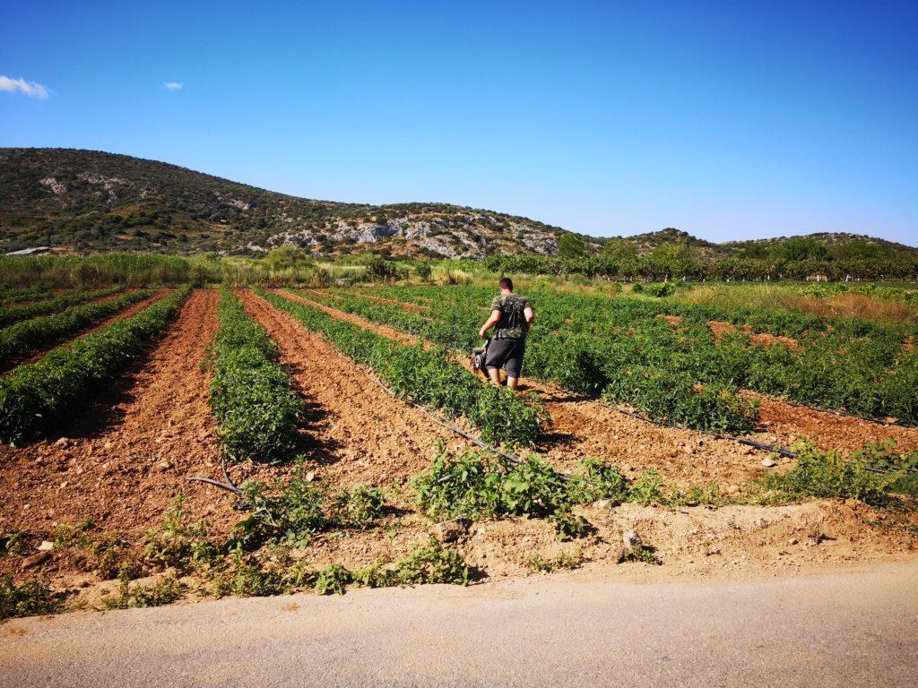 Agriculture in Porto Rafti