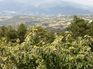 Panoranic view of mt. Olympus and the farm fields at its banks