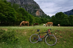 A road bike during a cycling break in front of wild horses in Epirus